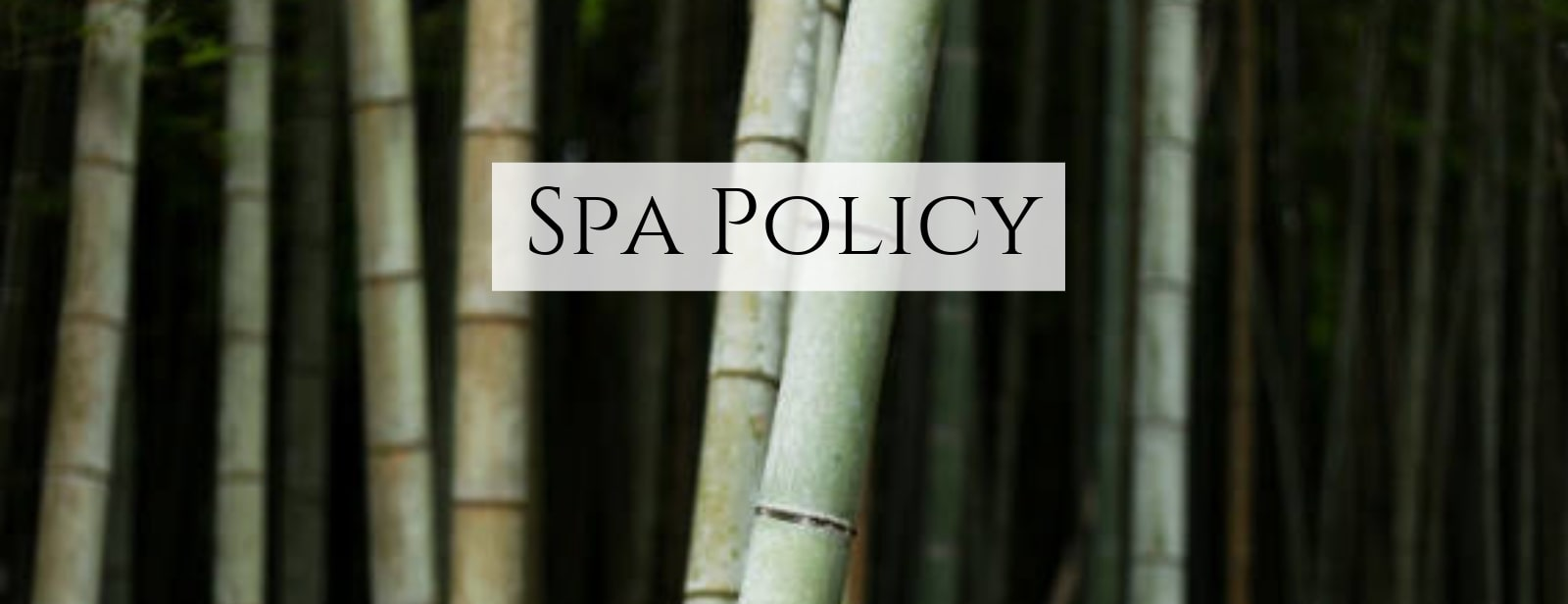 Detailed view of bamboo to help you learn how to spa.